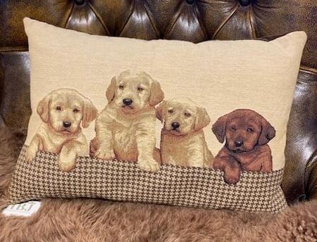 Labrador puppy's 35 x 45
