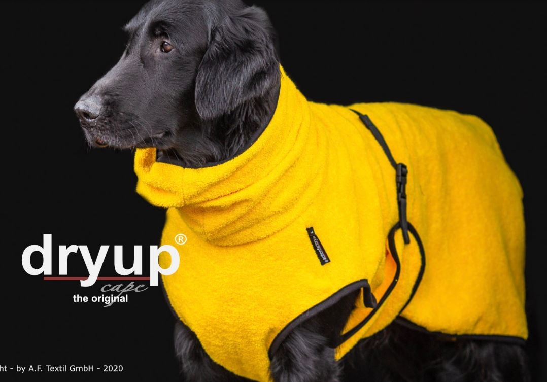 Dry-up Cape Yellow