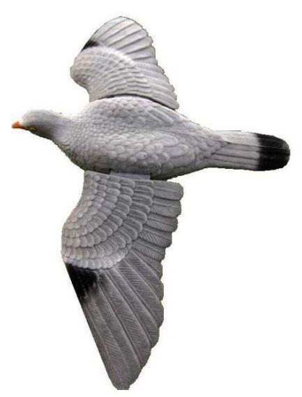 Lokvogel Duif geflockt vliegend