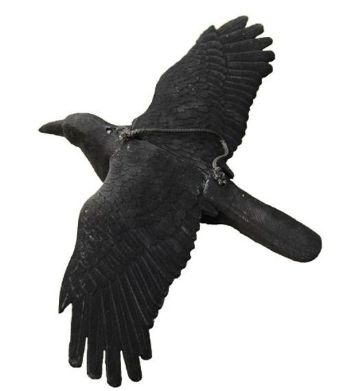 Lokvogel Kraai geflockt vliegend