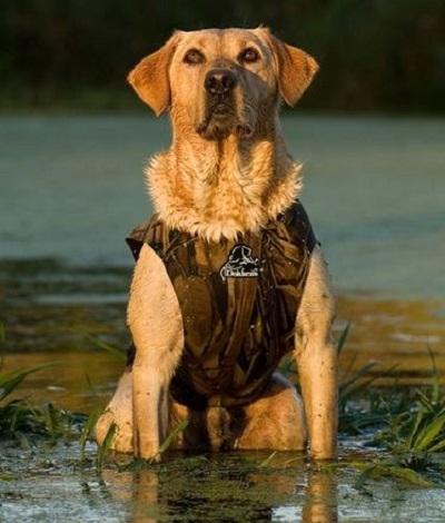 Honden Vesten & Jassen